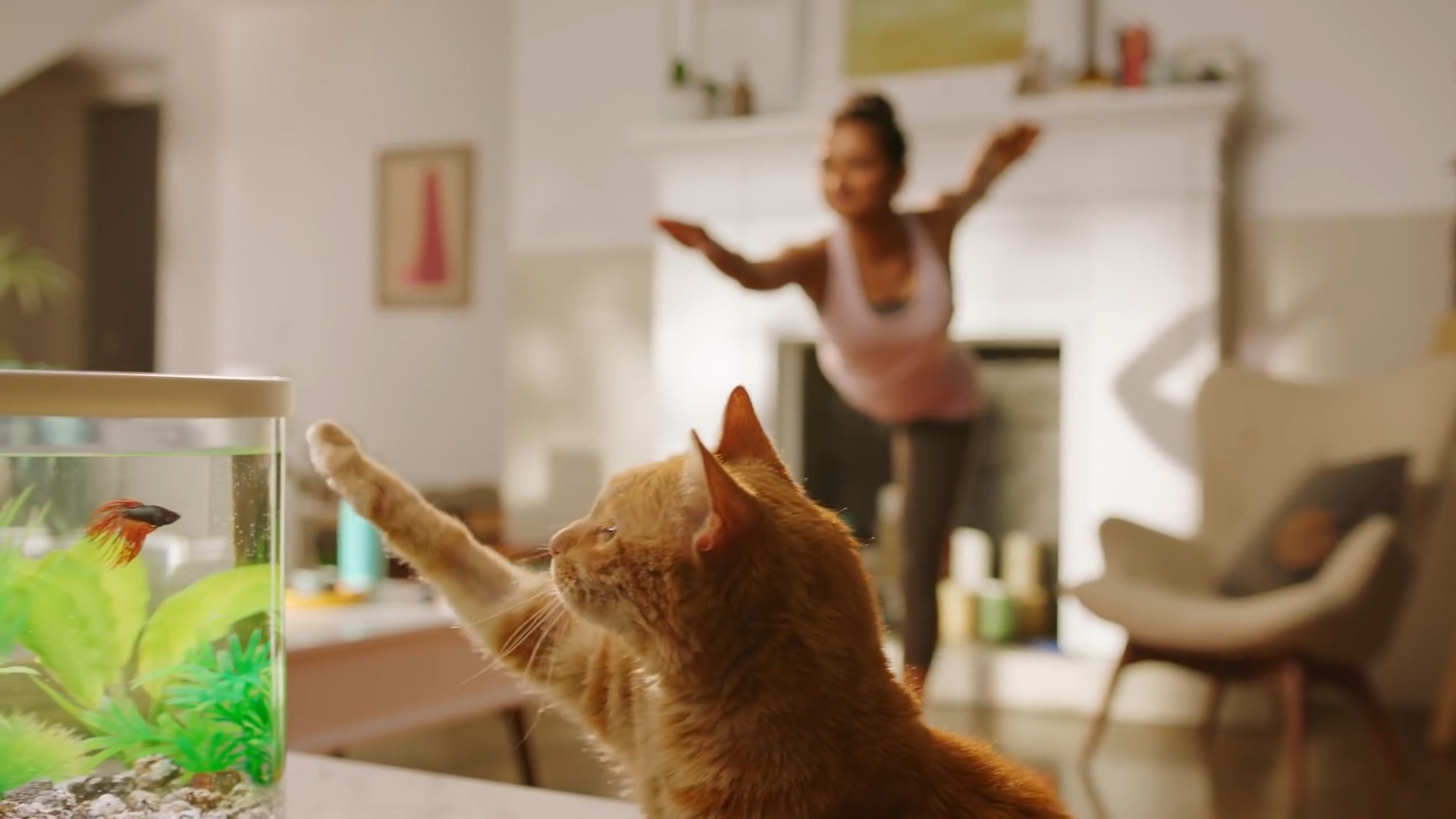 The Workout Buddy: Cat Solutions