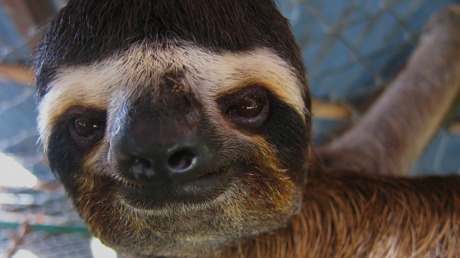 [2] Sloths! The strange life of the world's slowest mammal